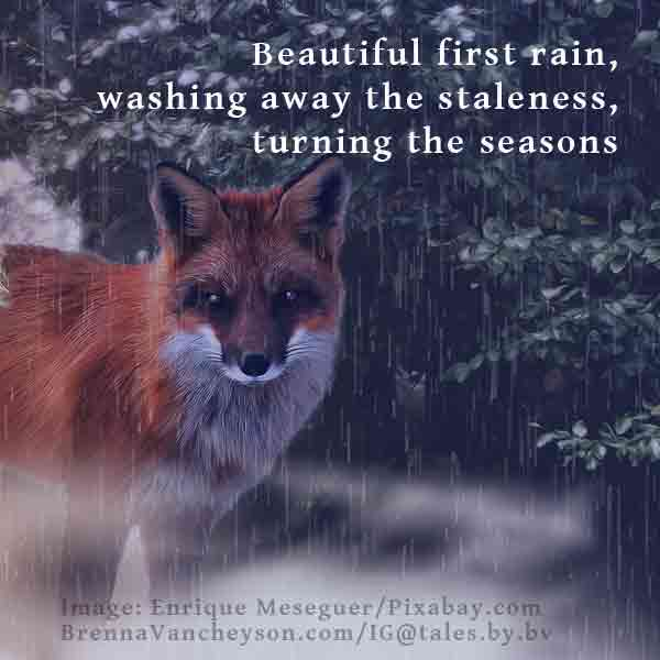 "Image of fox in the rain with haiku: ""Beautiful first rain / washing away the staleness / turning the seasons"" (by Brenna Vancheyson)"